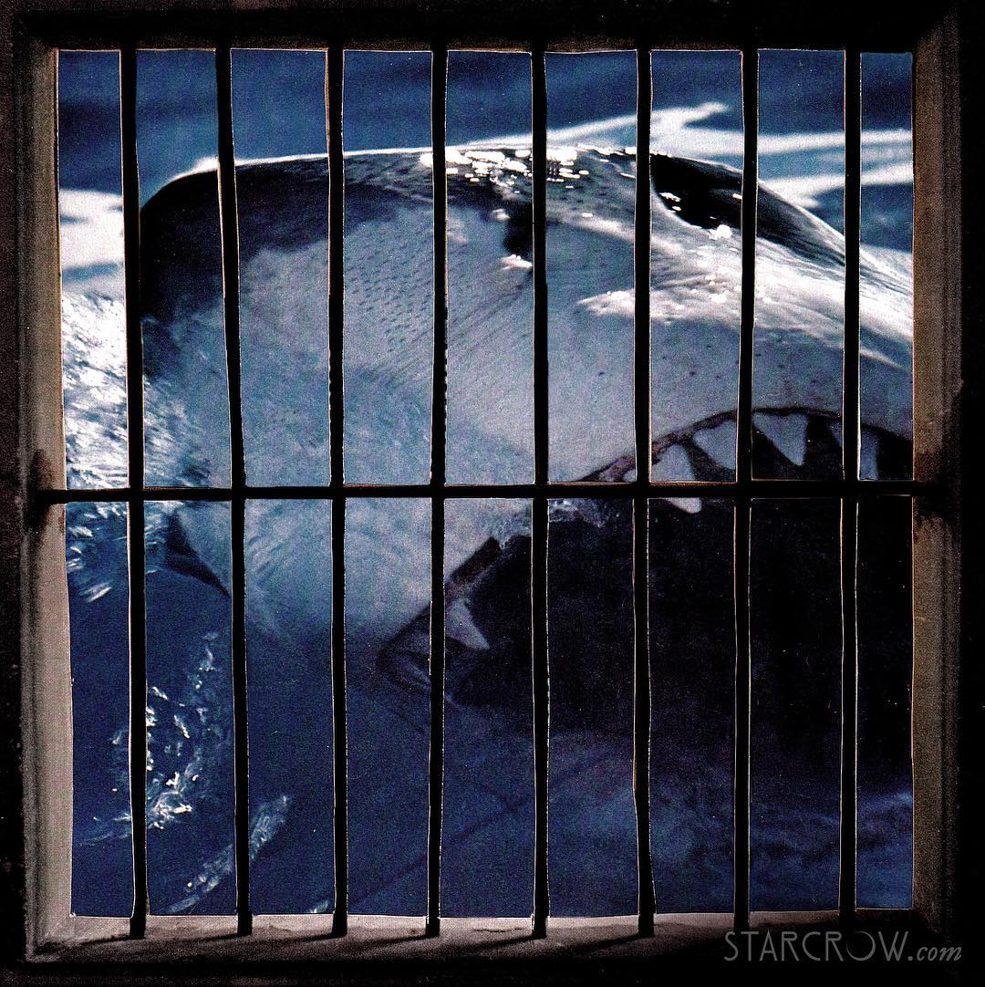 "When I showed this collage to my husband he said that he didn't get it. Our 6 year-old broke it down for him saying, ""The shark is in jail. I think it's a metaphor Daddy."" Yes, it is a metaphor. Mars conjunct Uranus today and tomorrow has me thinking about some predators that I want to see in jail, no offense intended to all of the sharks reading this post. Uranus is the planet of sudden shock and surprise. It crashes in like lightening and disrupts the status quo. Mars is the planet of action. Together they are a particularly explosive combination. This conjunction brings big revelations and forces new action. I have been staring at this conjunction for weeks, and every time I look at it I can't help but think, ""Mueller? Mueller?"" I am watching and waiting and wondering how this conjunction will manifest in the political realm… Bear in mind that this month opened with Mars trine Pluto, and Mars is still under Pluto's influence as it approaches Uranus. And what is Pluto bringing to this party? The desire to pull all of the skeletons out of the closet. Bobby Muell, this would be a fine time for you to release that little report that you have been working on. This week may very well close with the report still under wraps, but regardless what happens specifically, Uranus and Mars will add something to the national conversation. This conjunction is impacting us individually too. I am talking about big revelations in our personal lives that require new and revolutionary action as we move into the future. This might look like a course correction, and ultimately it can be a very good thing. People with planets at 27-29 degrees of cardinal signs and 0-2 degrees of fixed signs will feel this most intensely. It is going to be a wild ride as Uranus keeps moving toward its ingress into Taurus on March 7th"